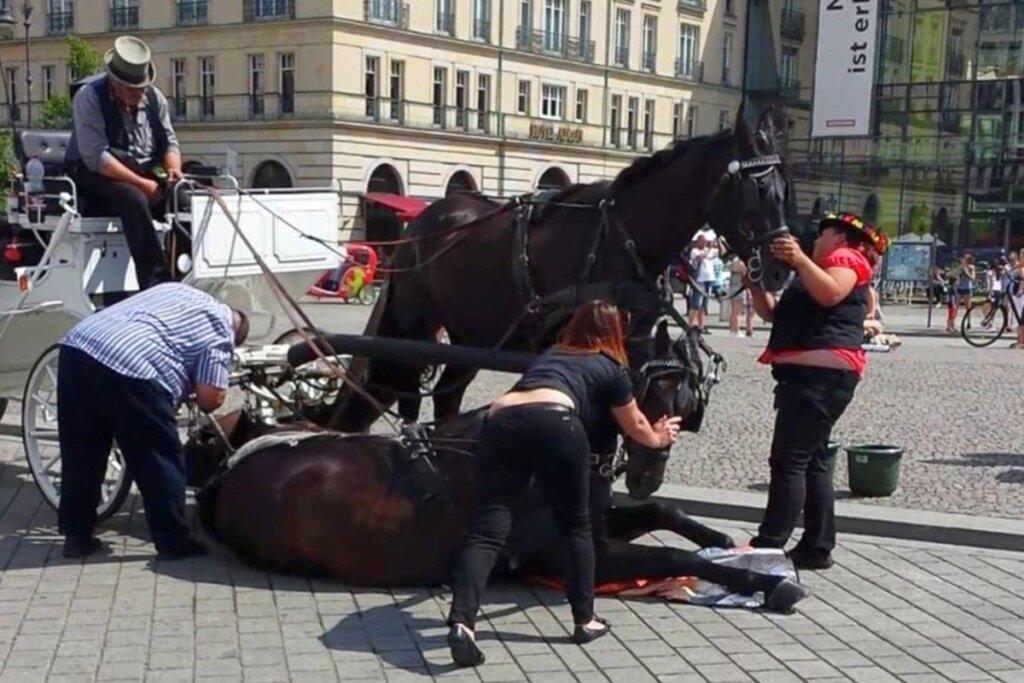 pferdekutschen unfall