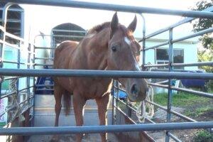 pferd im käfig