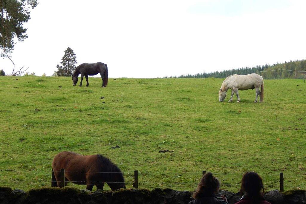 pferde essen