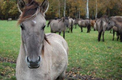 Pferd im Fokus auf der Wiese