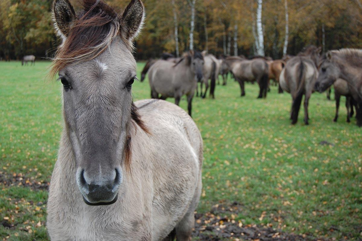 Das Pferd – 7 faszinierende Fakten über Pferde