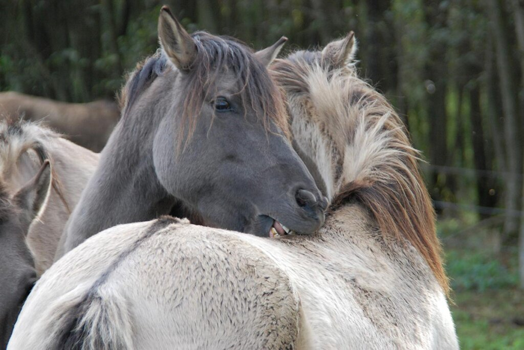 pferde kuscheln