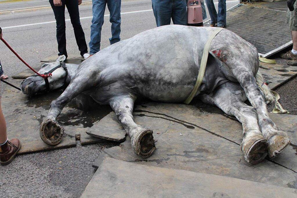 pferd liegt auf dem boden