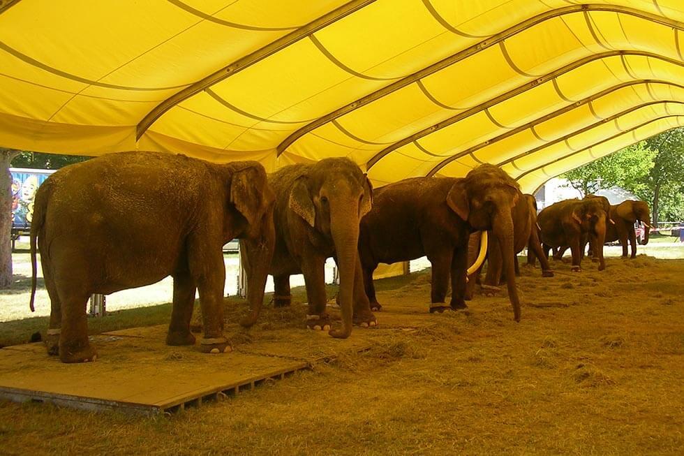 elefanten circus krone