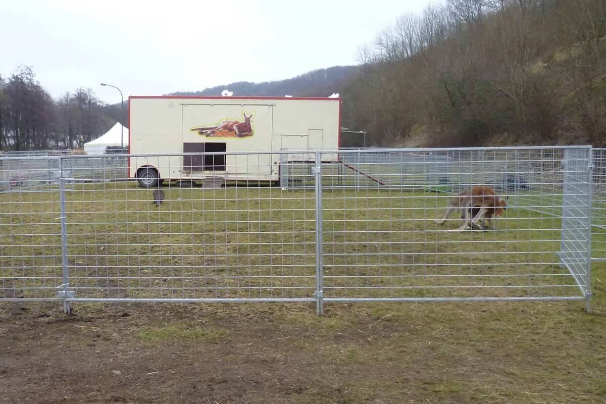 Kaengurus im abgesperrten Bereich bei Zirkus Charles Knie