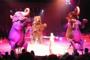 elefanten manege circus charles knie