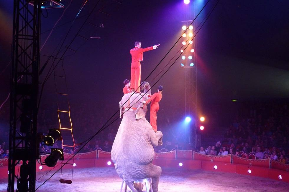 Elefant in der Zirkusmanege mit Menschen auf dem Kopf