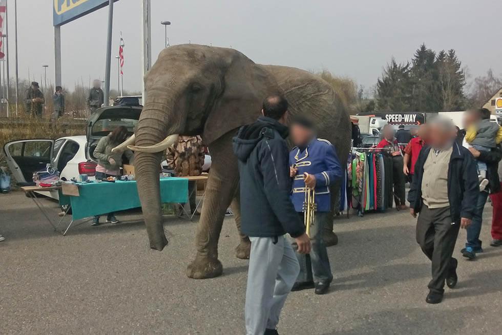 Elefant auf einem Flohmarkt