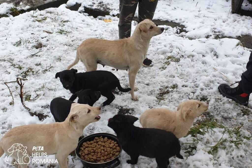 Straßenhunde fressen Futter