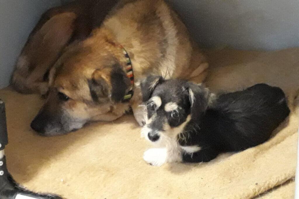 Hund mit Welpen in einer Hundebox