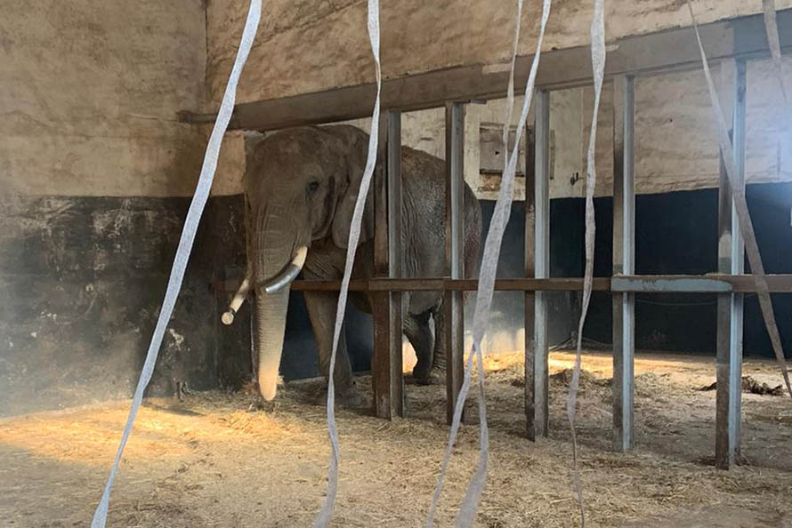 "Erlebnispark Starkenberg: Tierquälerei im ""Elefantenreservat"""
