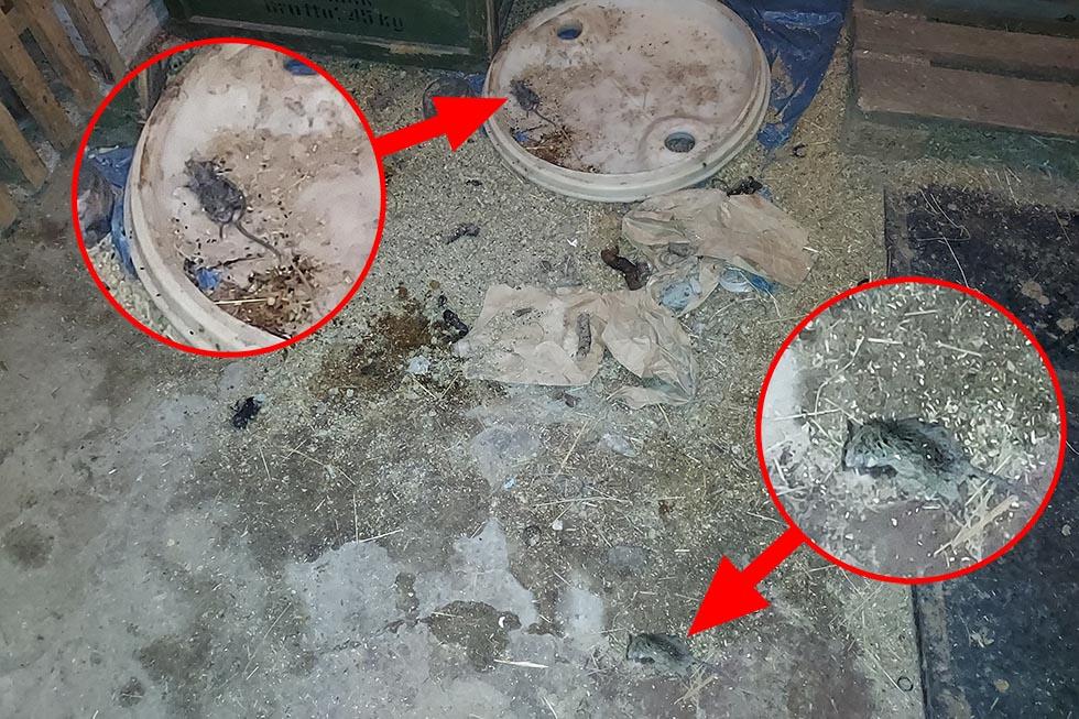 Tote Mäuse und Ratten im Hundezwinger