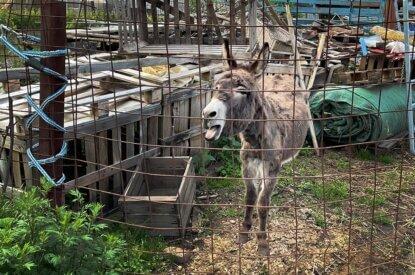 Esel in eingezaeunter Muellhalde