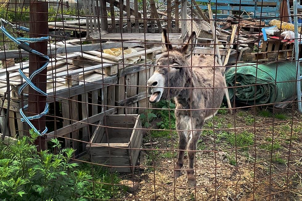 Esel lebt alleine auf Müllhalde – so leidet das Tier in Ranschbach