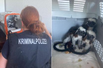 Collage Polizistin und Listzaffe in Transportbox