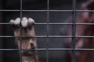 Affenhand hält sich am Gitter fest