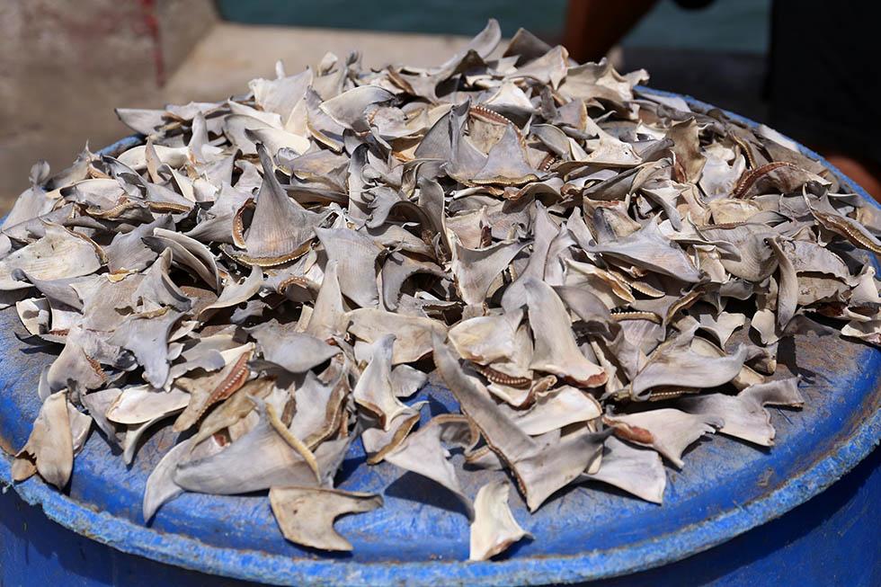 Haifischflossen auf einem Fischmarkt