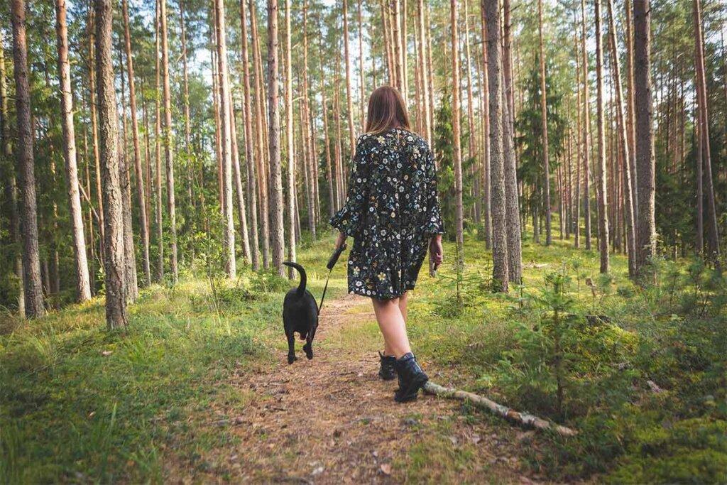 Frau geht mit Hund im Wald spazieren