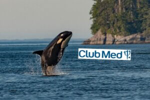 Collage Orca im Meer und Club Med Logo