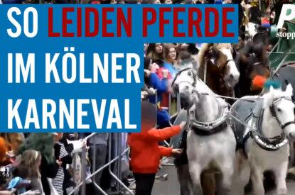 Pferdekutsche beim Karneval