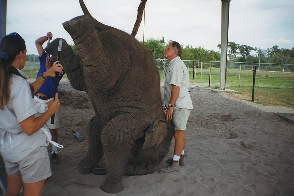 ringling brothers elefant