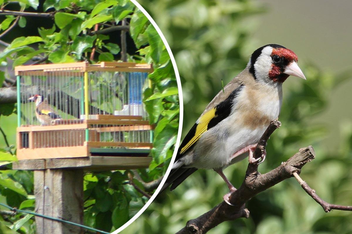 Anzeige: Person fängt offenbar rund 50 Wildvögel pro Monat