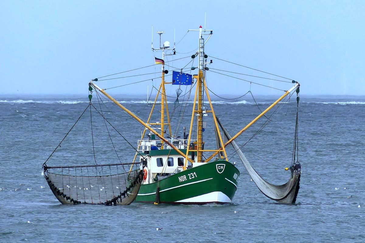 Erfolg: Import und Export von Fischen seit 2016 stark gesunken