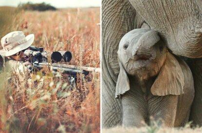 Collage Jaeger und Elefant
