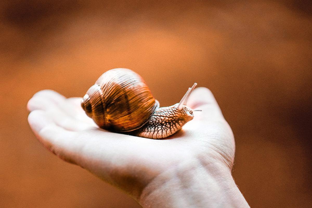 Schneckenschleim: Tierquälerei für Schneckencreme-Kosmetik?