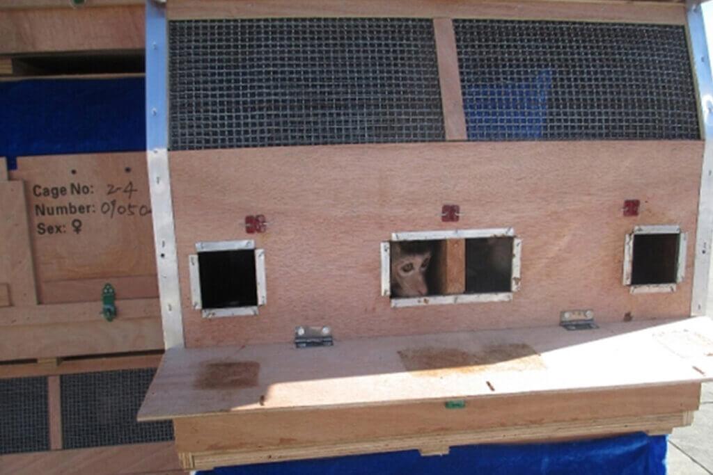 Affe in Transportbox aus Holz