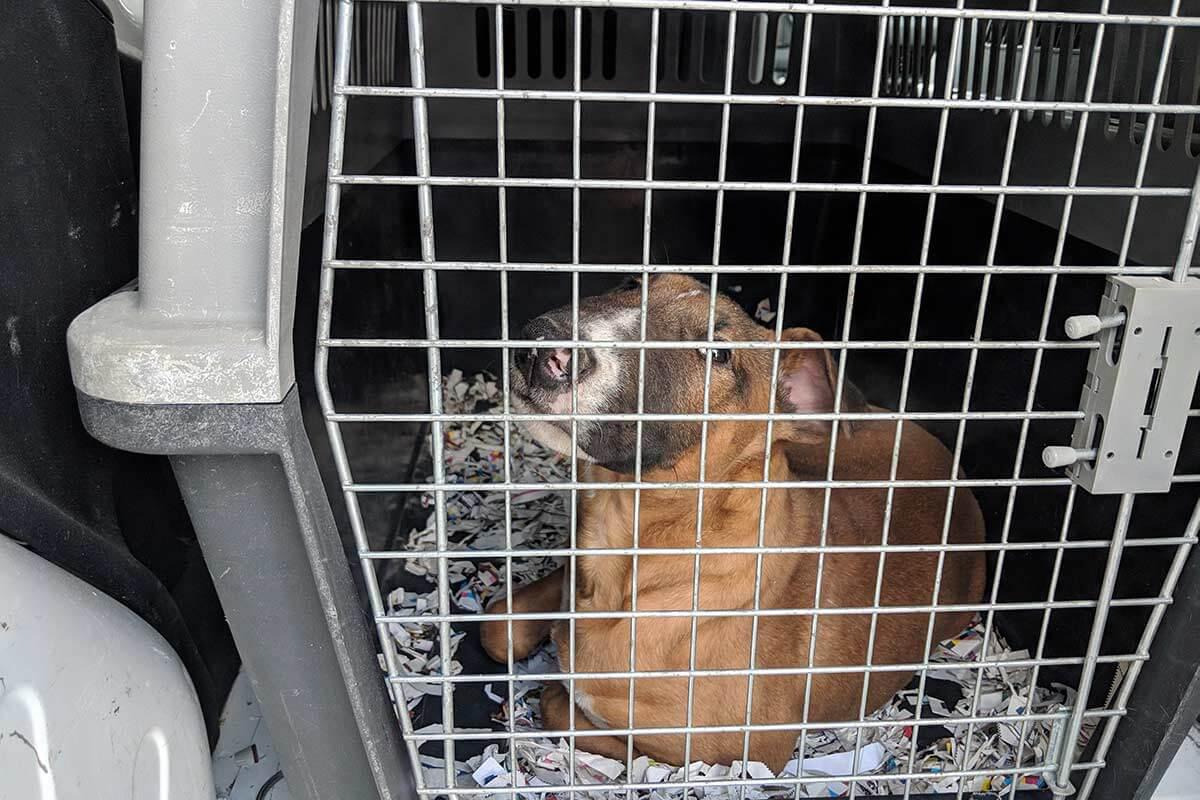 Tierhandel: 2021 monatlich über 36.000 Hunde online angeboten