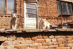 Katze stehen auf vermuellter Terrasse