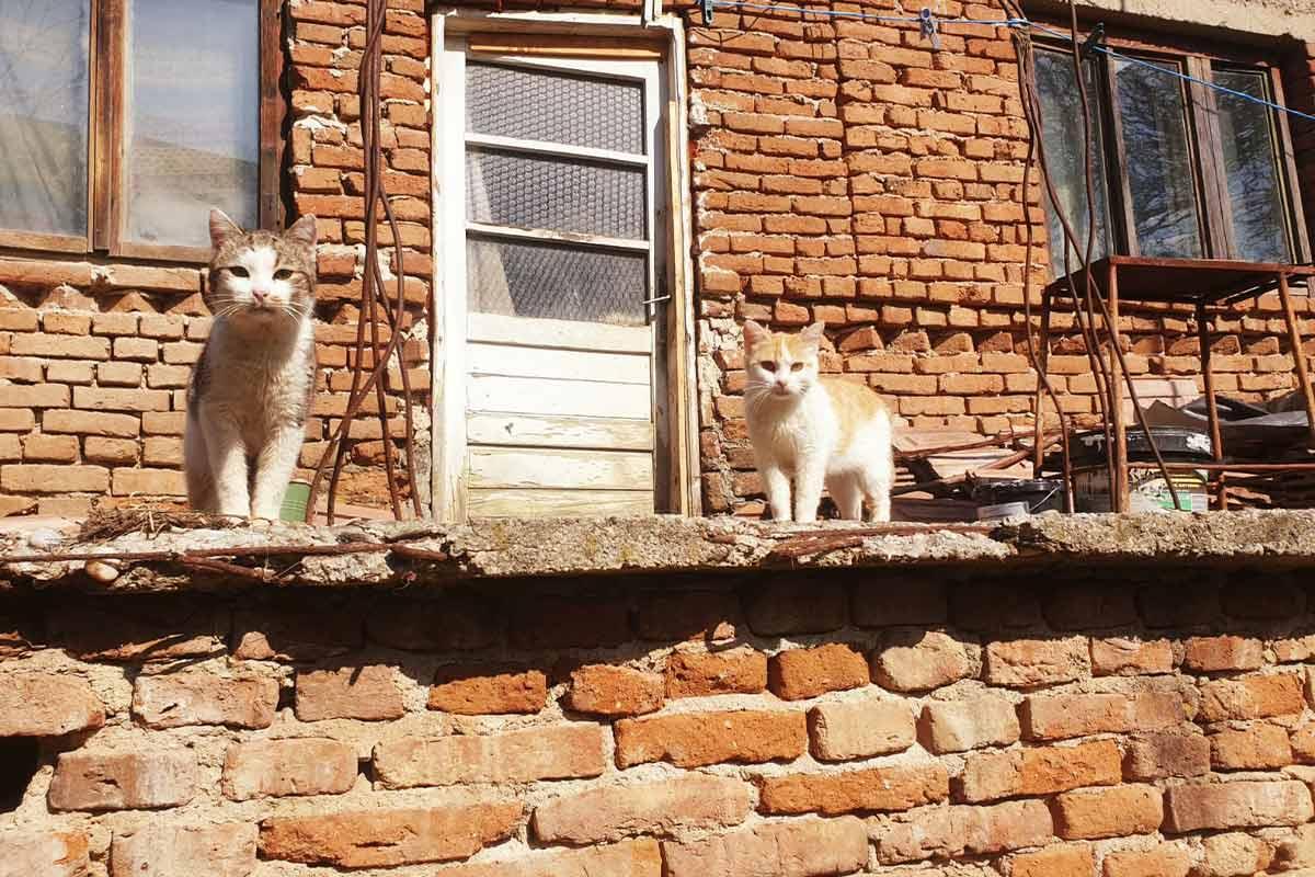 Das unsichtbare Leid der Katzen in Rumänien