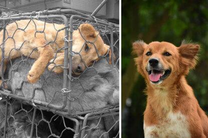 Collage Hund und Hund im Kaefig fuer Pelz