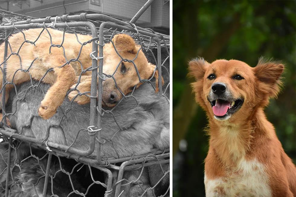 "Diese Marken fördern PETAs Kampagne ""Rettet unsere Haut!"""