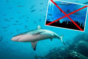 Collage Hai im Wasserbecken