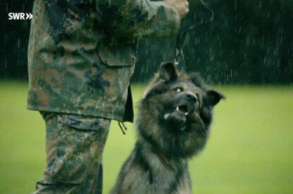 hund wird am halsband gezogen