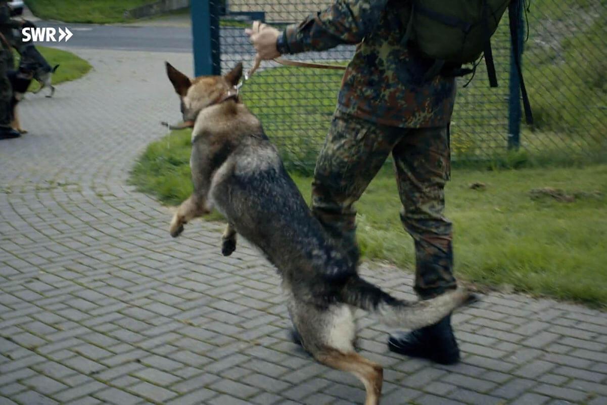 hund wird gezogen