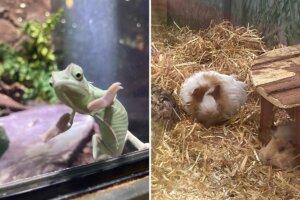 Tiere im Zoohandel