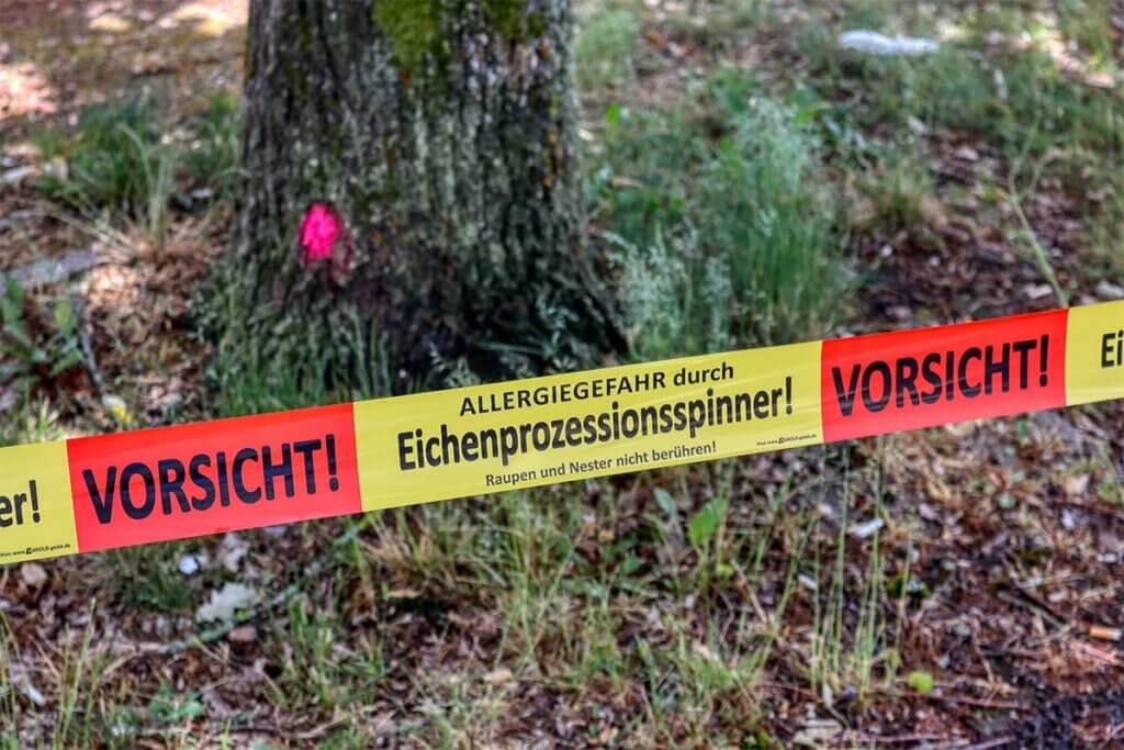 Eichenprozessionsspinner Absperrband vor Baum