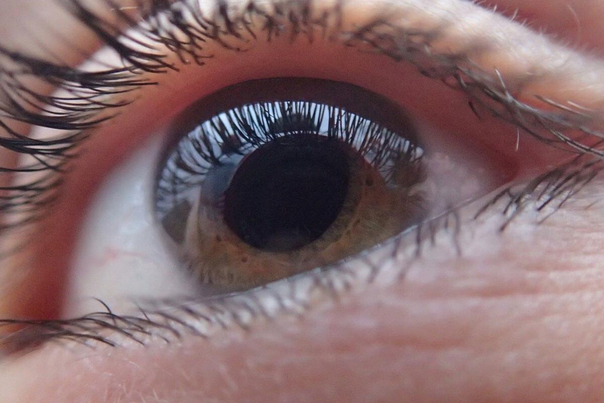PETA zeichnet Wissenschaftler für Augenhornhaut-Modell aus