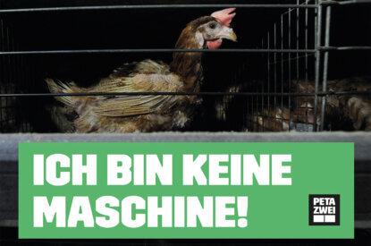 PETAZWEI Flyer zu Eier