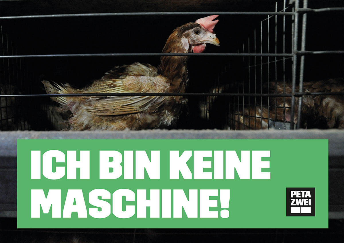 Aktiv gegen die Eierindustrie – kostenloses Demopaket bestellen!