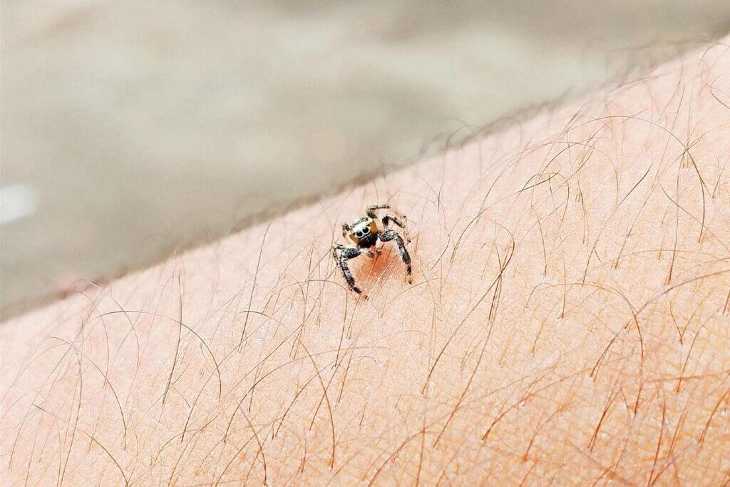 Spinne auf dem Arm eines Menschen