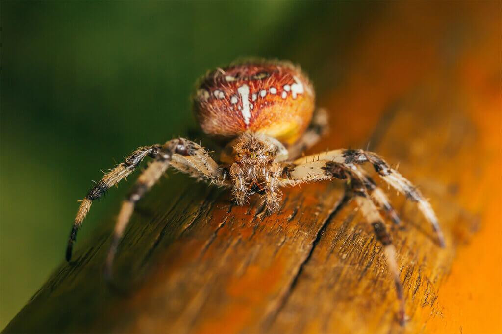 Spinne auf einem Baumstamm