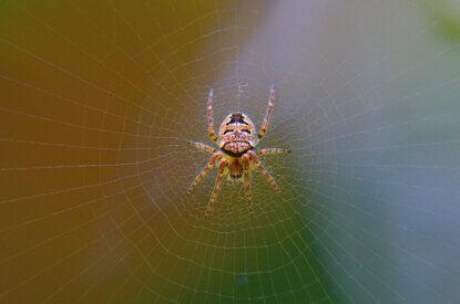 Spinne haengt im Netz