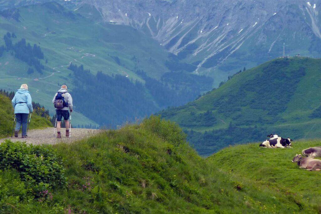 Wanderer laufen neben einer Kuhherde vorbei