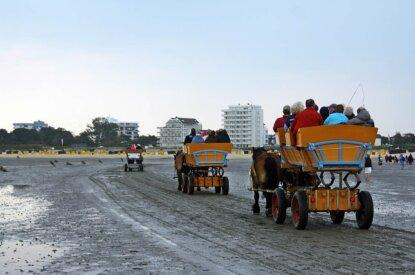 Pferdekutschen fahren durchs Wattenmeer