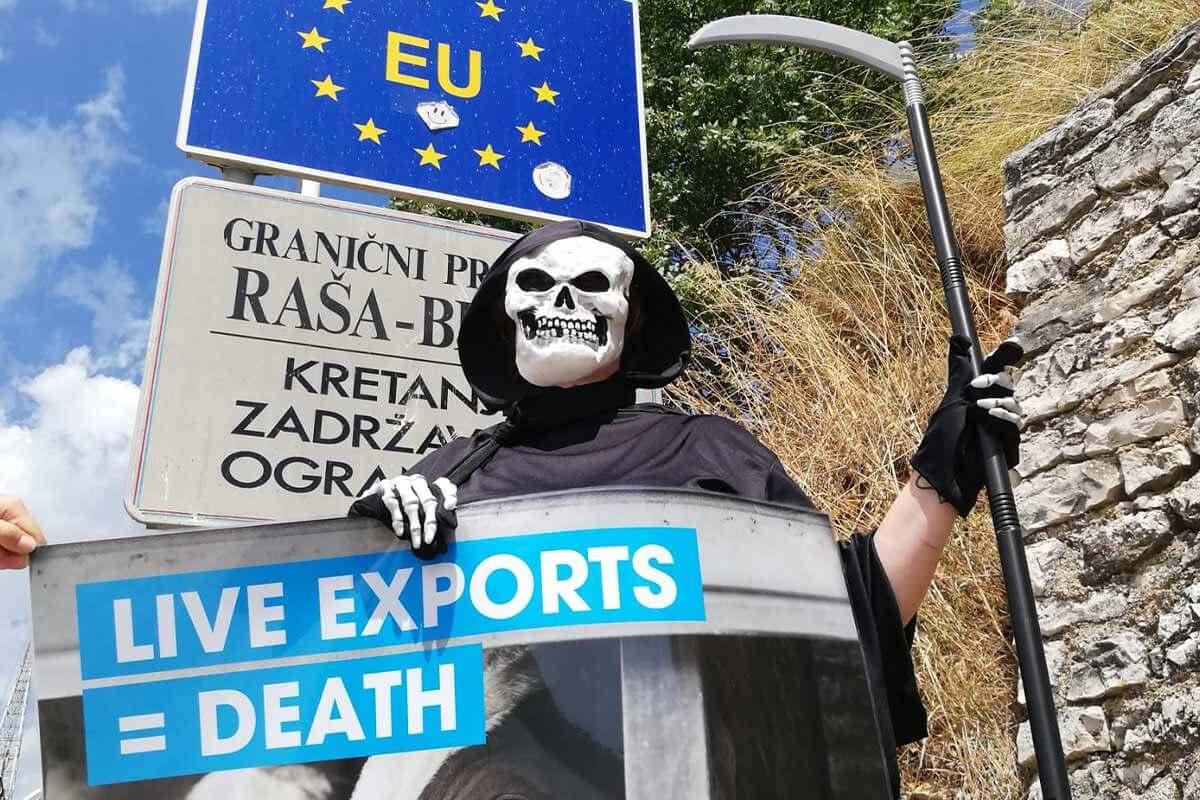 Europaweite PETA-Demos gegen tierquälerische Tiertransporte