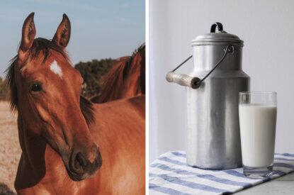 Pferd und Milch